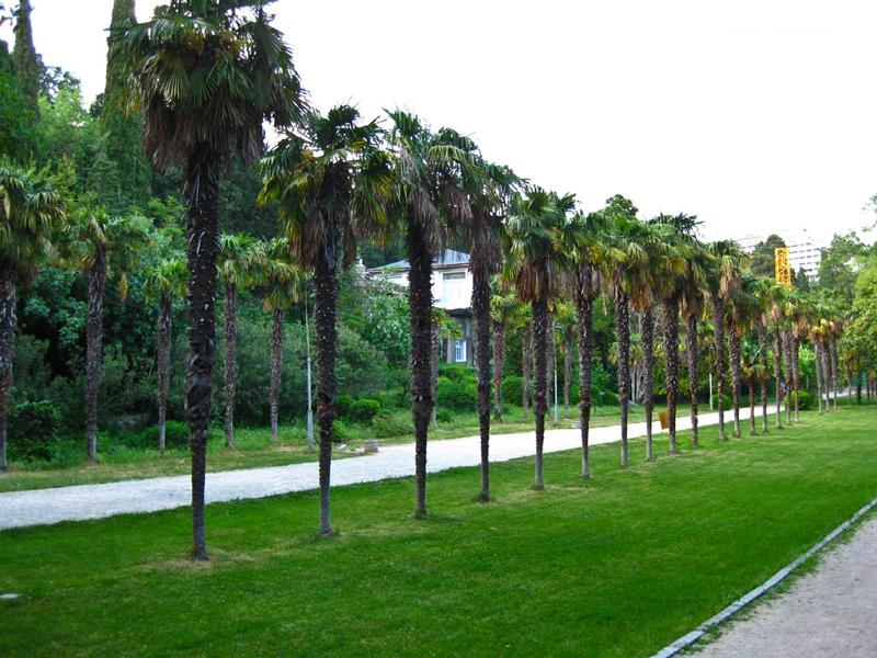 Уютный Мисхорский парк — любимое место для желающих спокойно провести время